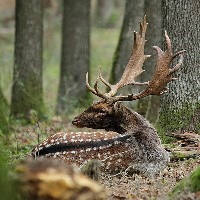 Daniel w lesie
