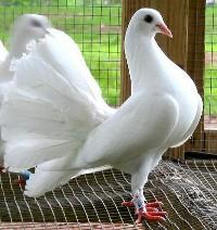 Zabezpieczenie gołębnika przed kuną
