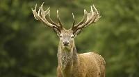 Ultradźwiękowy odstraszacz na dziki, kuny, lisy, sarny i jelenie