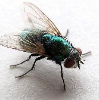 Dezynsekcja owadów