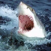 Paszcza rekina