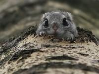 Polatucha w dziupli w drzewie