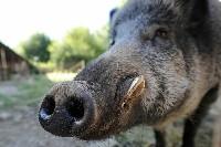 Odstraszacz zapachowy na dziki i sarny