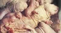 Samica golca z młodymi
