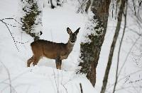Co jedzą zwierzęta w trakcie zimy