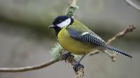 Dokarmianie dzikich ptaków