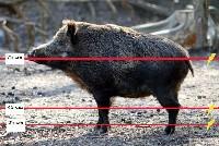 Ułożenie linek w ogrodzeniu na dziki